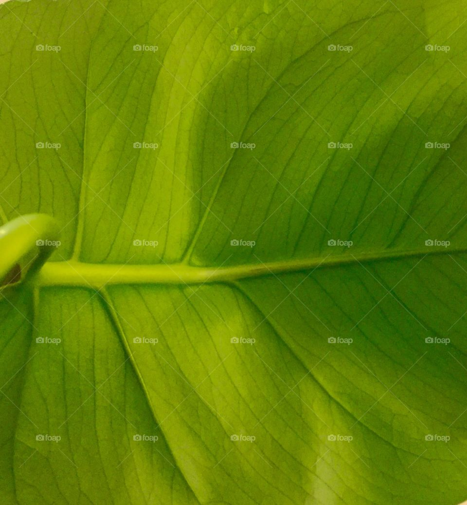 Background of green leaf