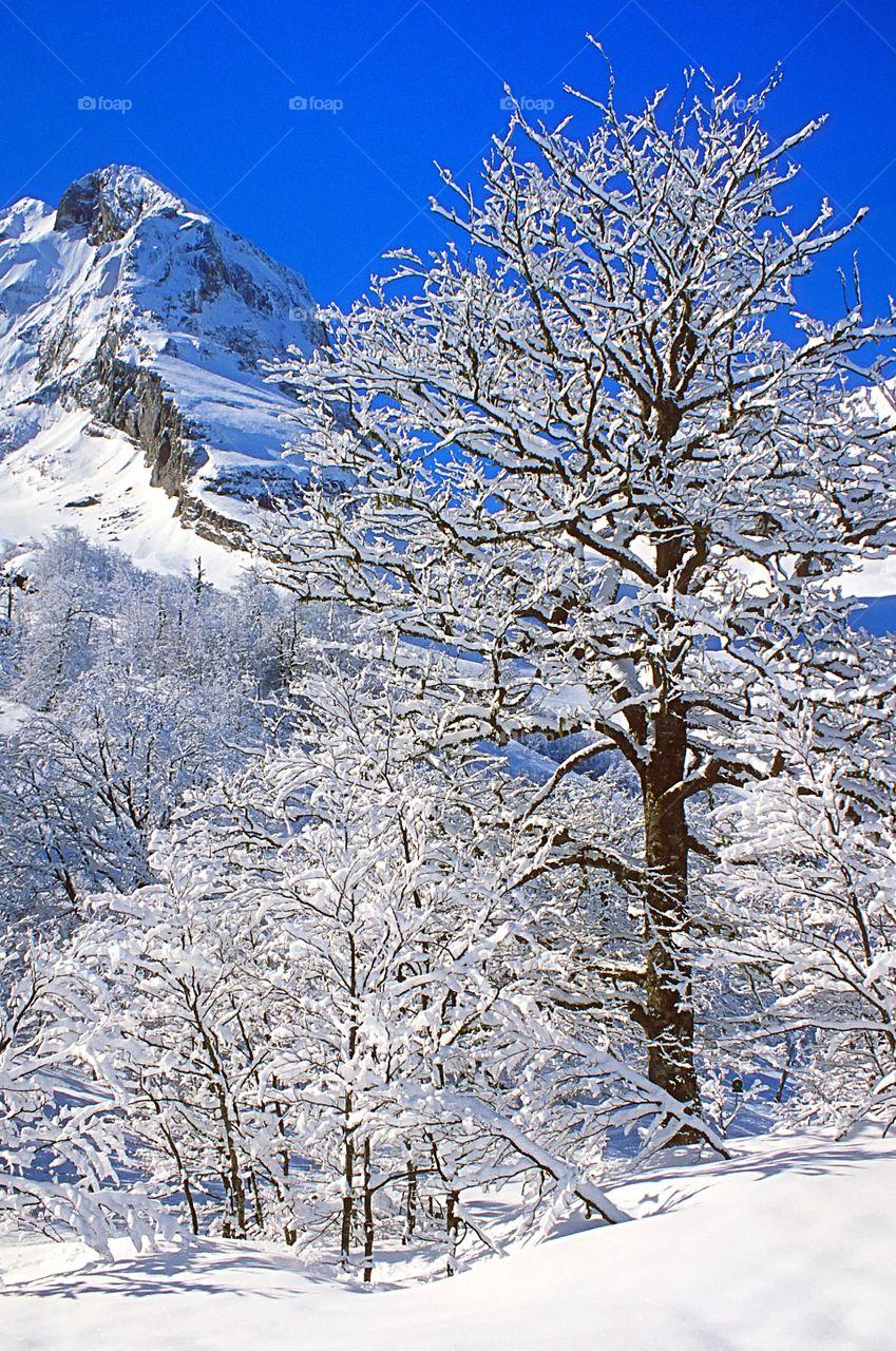 Snow scene in the Swiss Alps.
