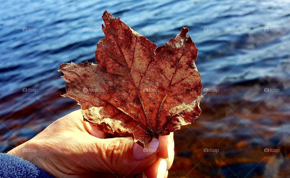 Female hand holding a single Maple Leaf to the sun by the water's edge . Happy 150th birthday Canada. I wouldn't trade a million dollars for one single Maple Leaf By Roy Payne  I've seen a lot of sadness in the countries of this world, I've seen the starving faces of a million boys and girls; I've walked the war torn countryside and the bloody battered streets, Where young men fought and died because they wanted to be free.  And as I watch my children playing freely with their friends, I thank God for this country, mister, that we're living in; There are no cries of fighting soldiers dying on our streets, I wouldn't take a million dollars for a single Maple Leaf.  When you think you've got troubles, you just listen to the news, And I'm sure you'll realize, my friends, your troubles they are few; Compared to those of others in the countries of this world, We live in a paradise, a rare and priceless pearl.  Spoken: Yes, friends, we've got so much to be thankful for, all across this land, From the mighty Pacific Ocean to the shores of Newfoundland; So tonight when your children pray down on their knees, You ask them to ask God to bless Canada and forever keep her free.  Yes, as I watch my children playing freely with their friends, I thank God for this country, mister, that we're living in; There are no cries of fighting soldiers dying on our streets, I wouldn't take a million dollars for a single Maple Leaf. I wouldn't take a million dollars for a single Maple Leaf.  ####….Roy Payne….####