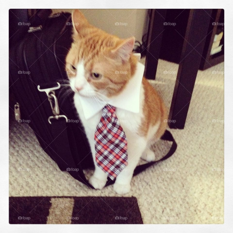 Ok, dad, ready to go to work today!