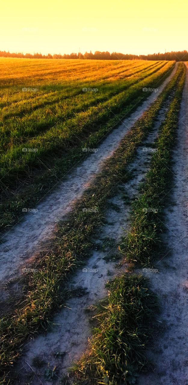 Field road to orange sunset
