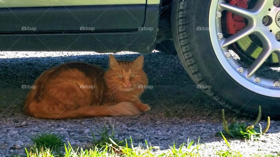 Cooling down! . Cooling down under my car!