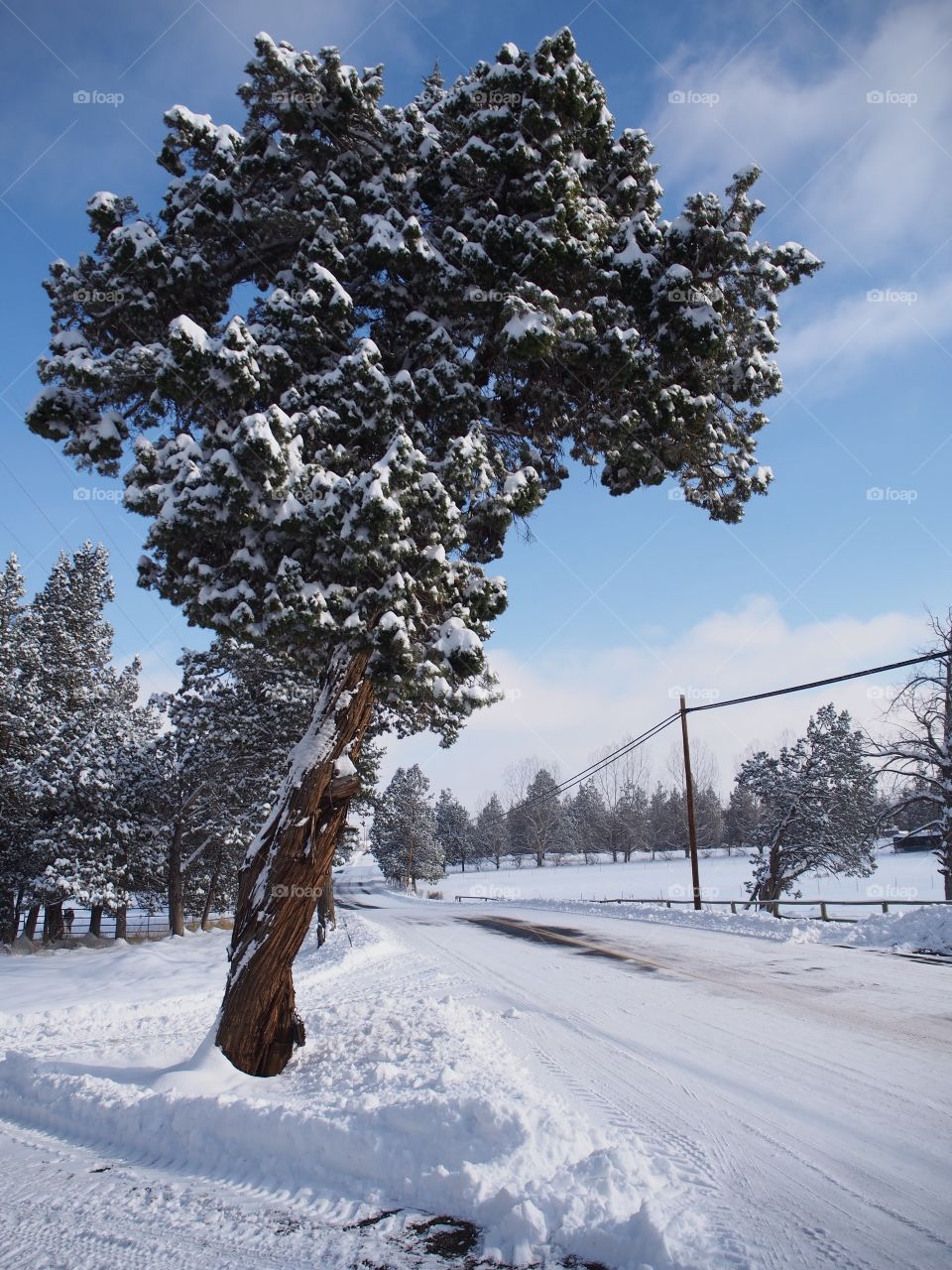 A juniper tree covered in fresh snow hangs over a snow covered rural country road in Central Oregon on a beautiful sunny day.