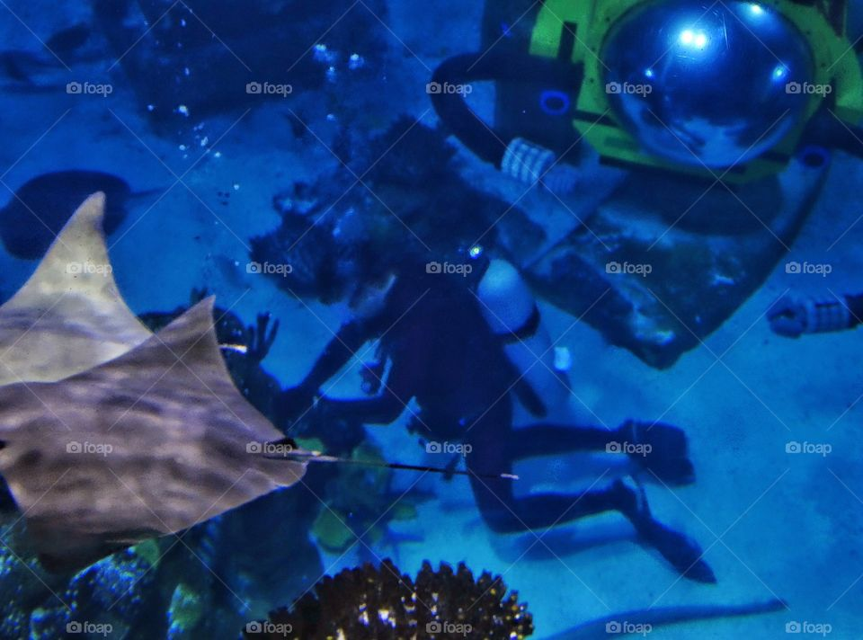 Scuba Diving. Scuba Diver With Manta Ray And Personal Submarine