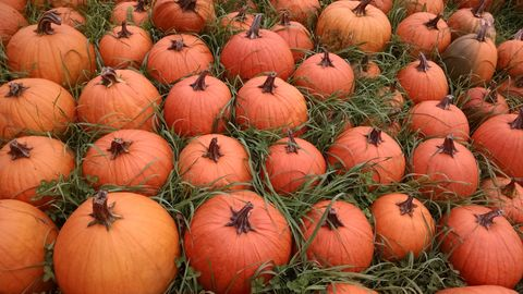 Arranged pumpkins in grass
