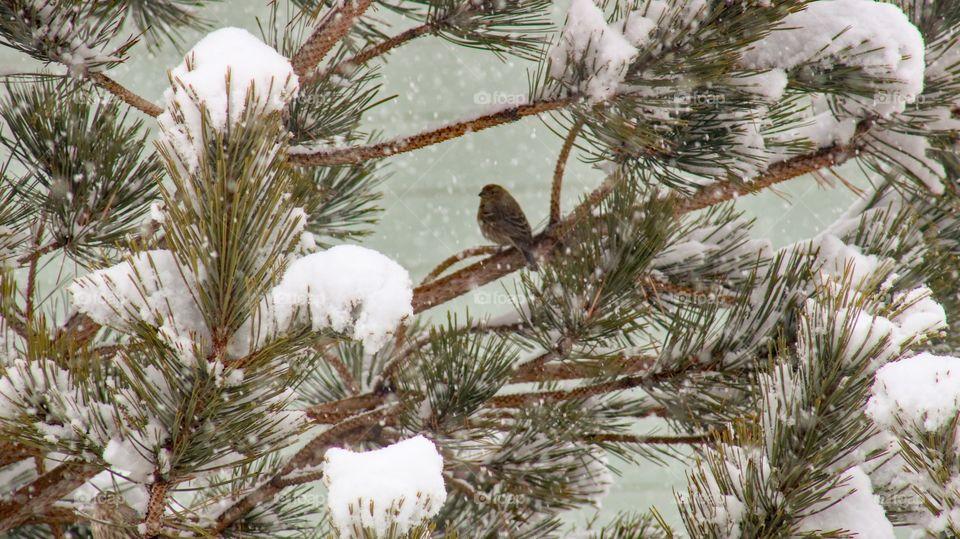 Bird hiding from the snow