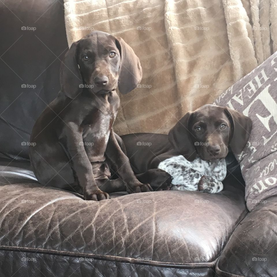 Tired puppies but still curious
