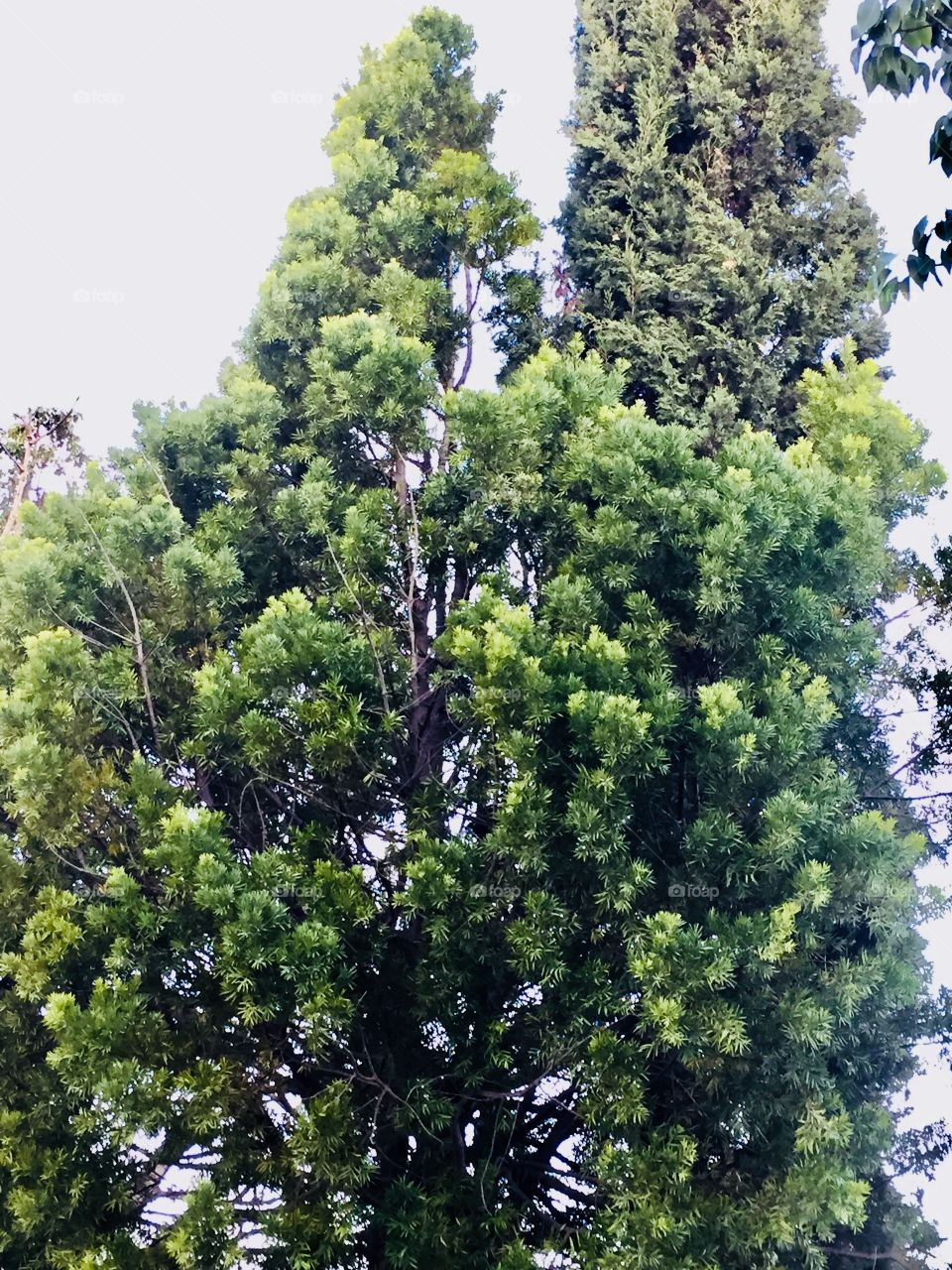 Beautiful green and lustrous tree