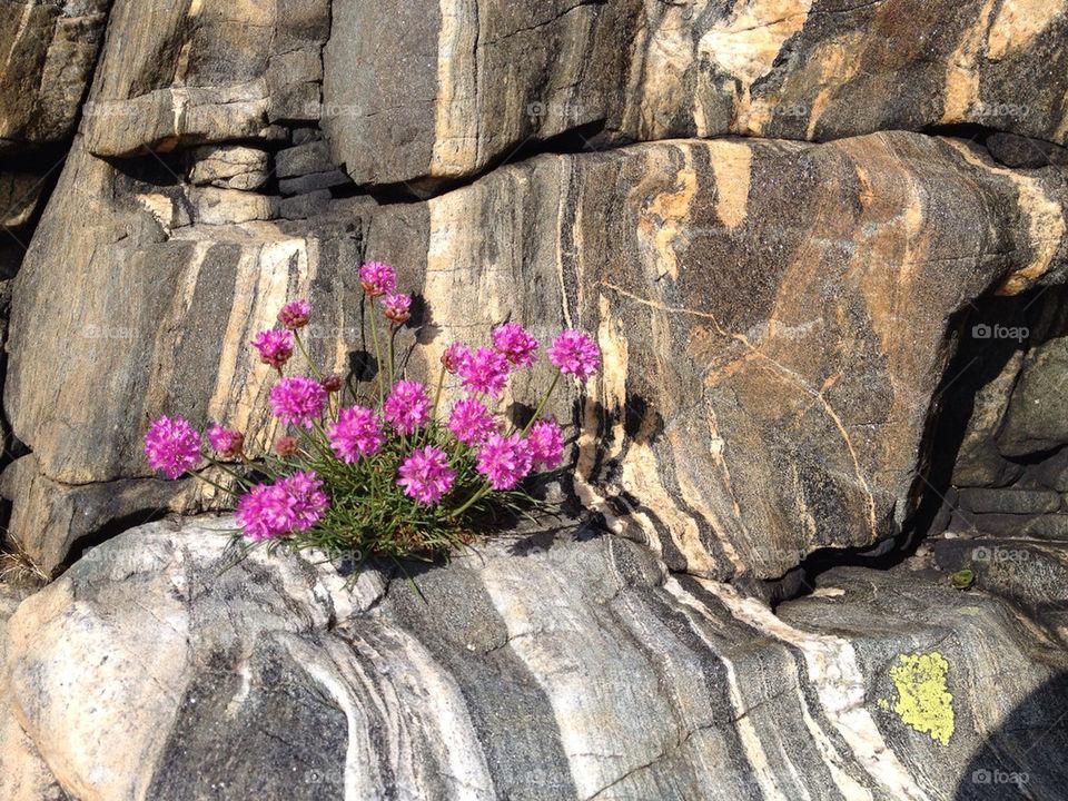 Flowering plant on rock in sunlight