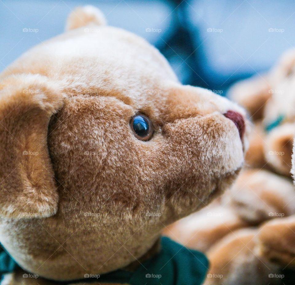 Close-up of bear face