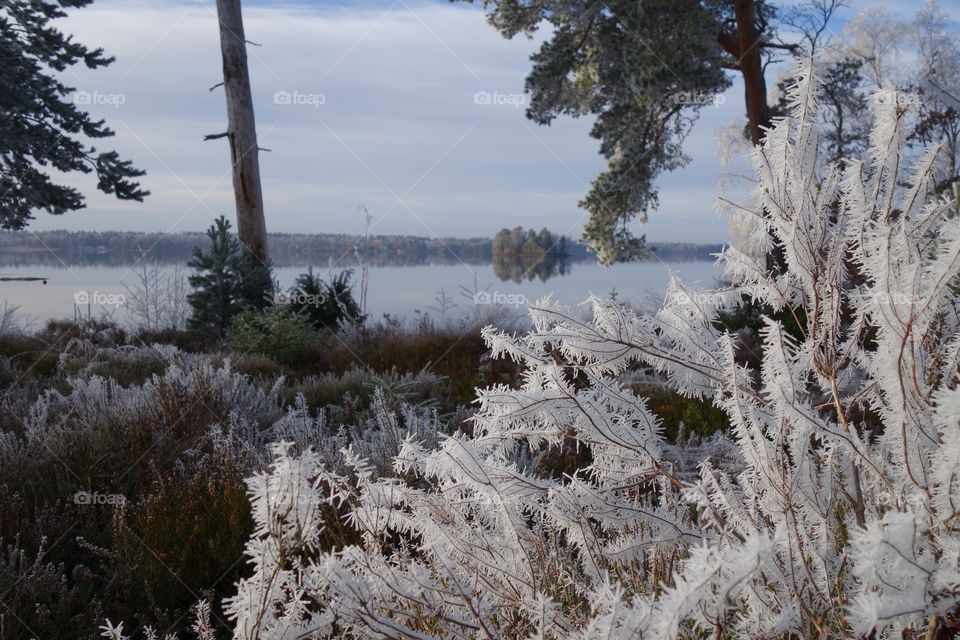 Scenic view of winter
