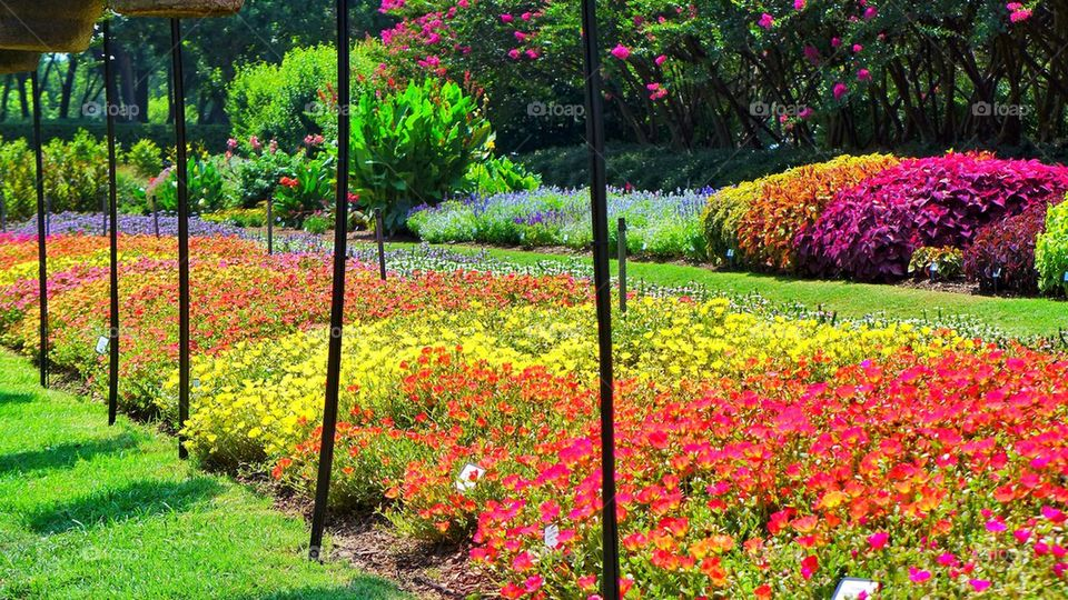 View of blossoming flowers   color image, photography, outdoors, day
