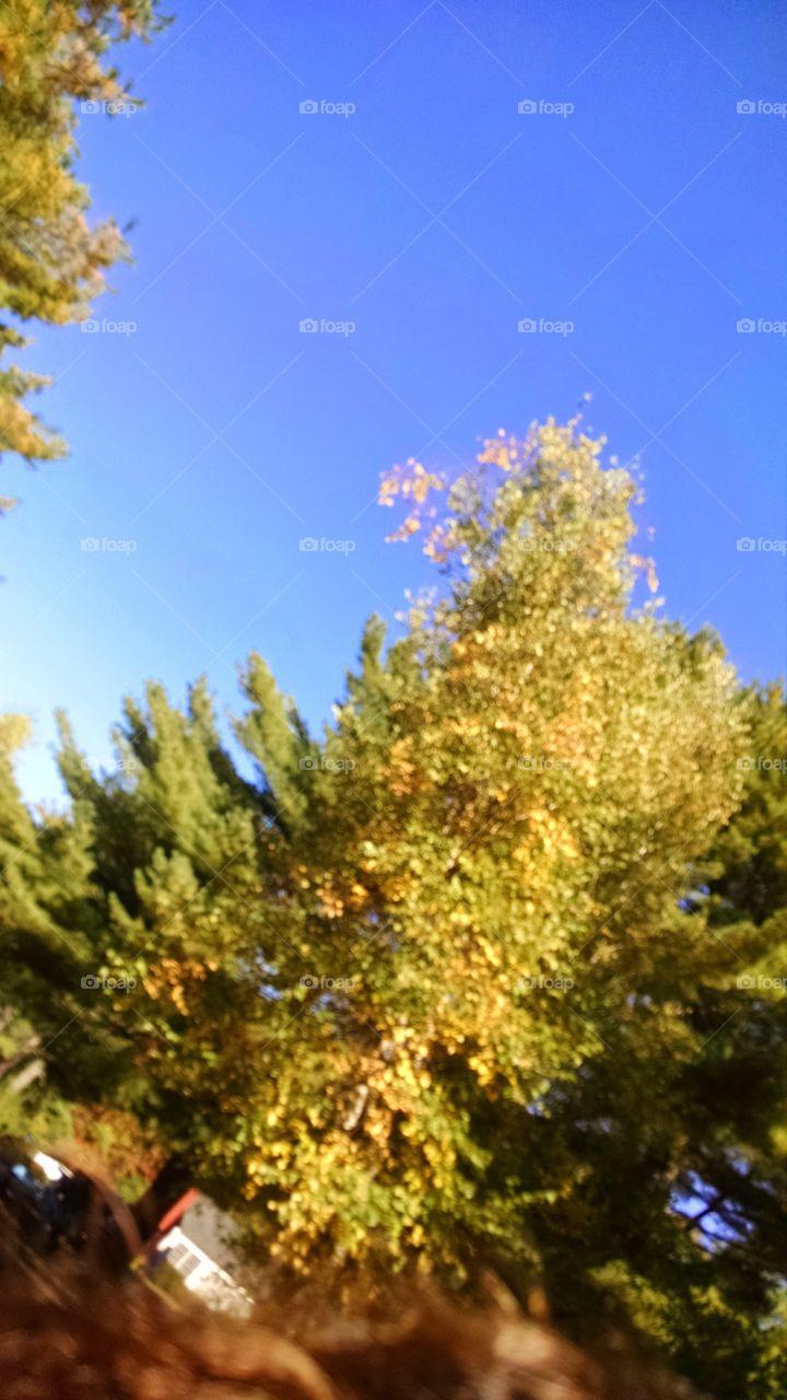 fall colors. sky so blue trees soo green