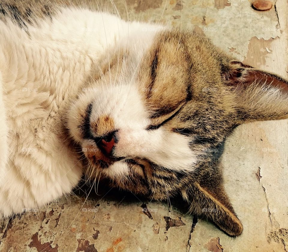 Sleepy time!. Sleeping Cat the Nursery