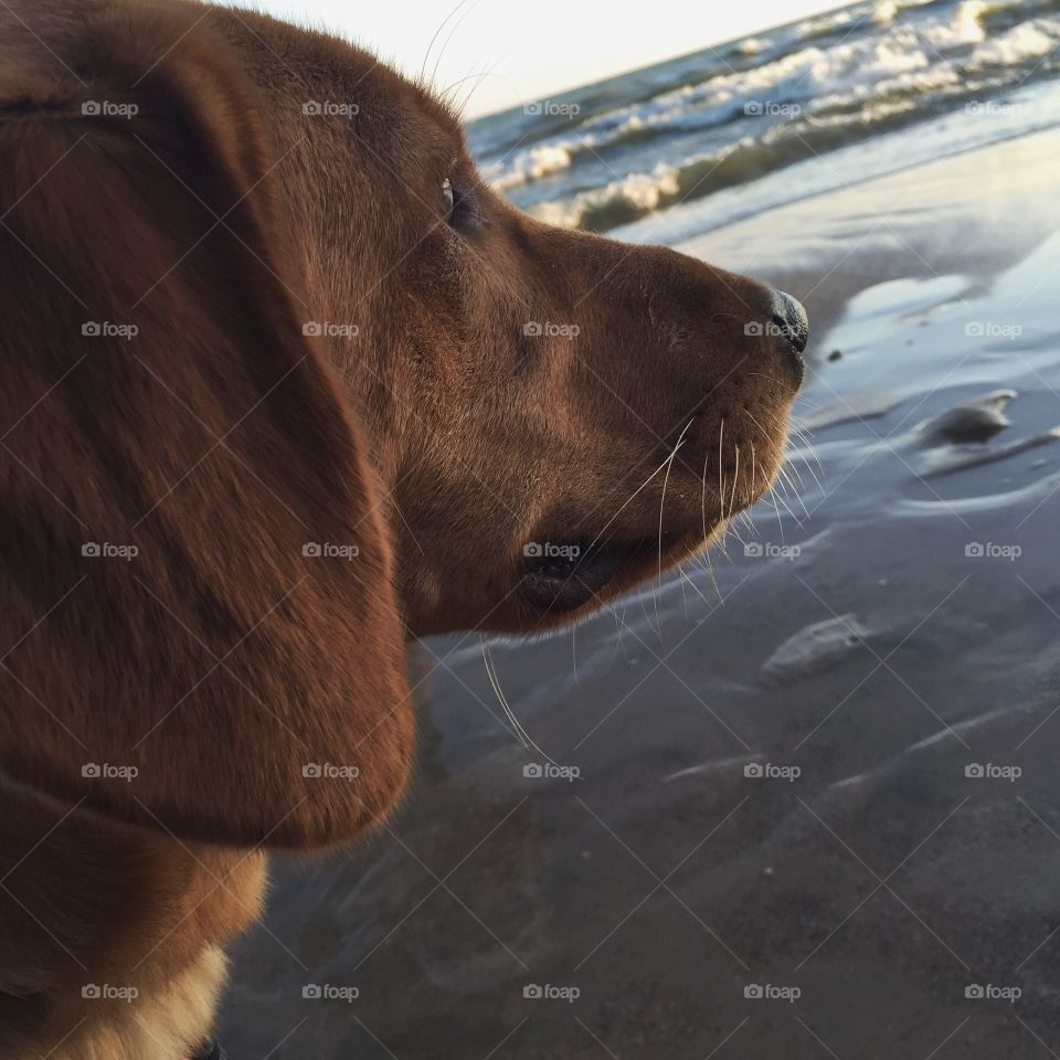 Dog, Portrait, No Person, Mammal, Winter