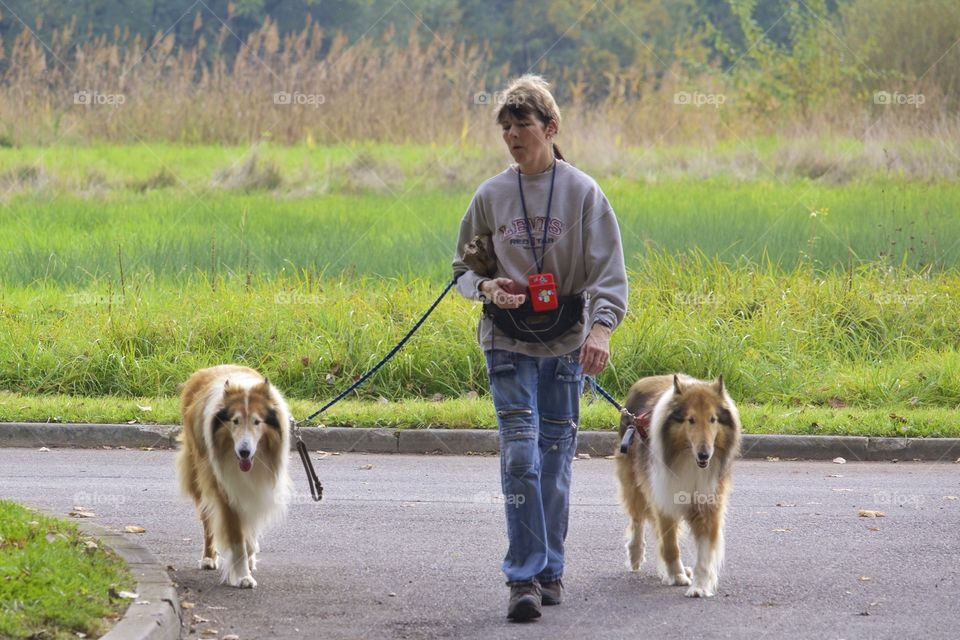 Walking The Dogs. Woman walking her dogs