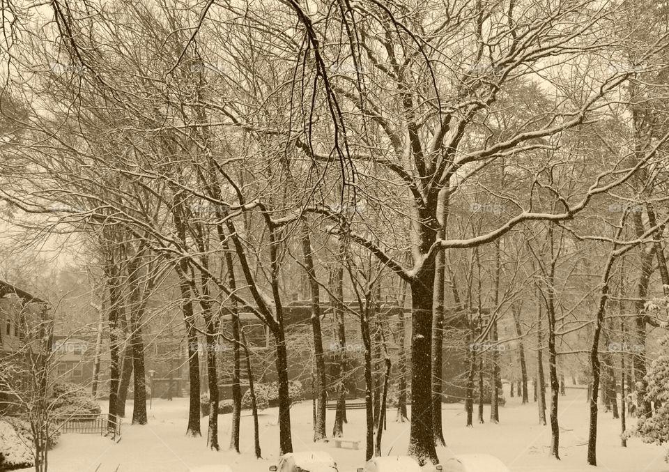 Winter Trees. cool winter days