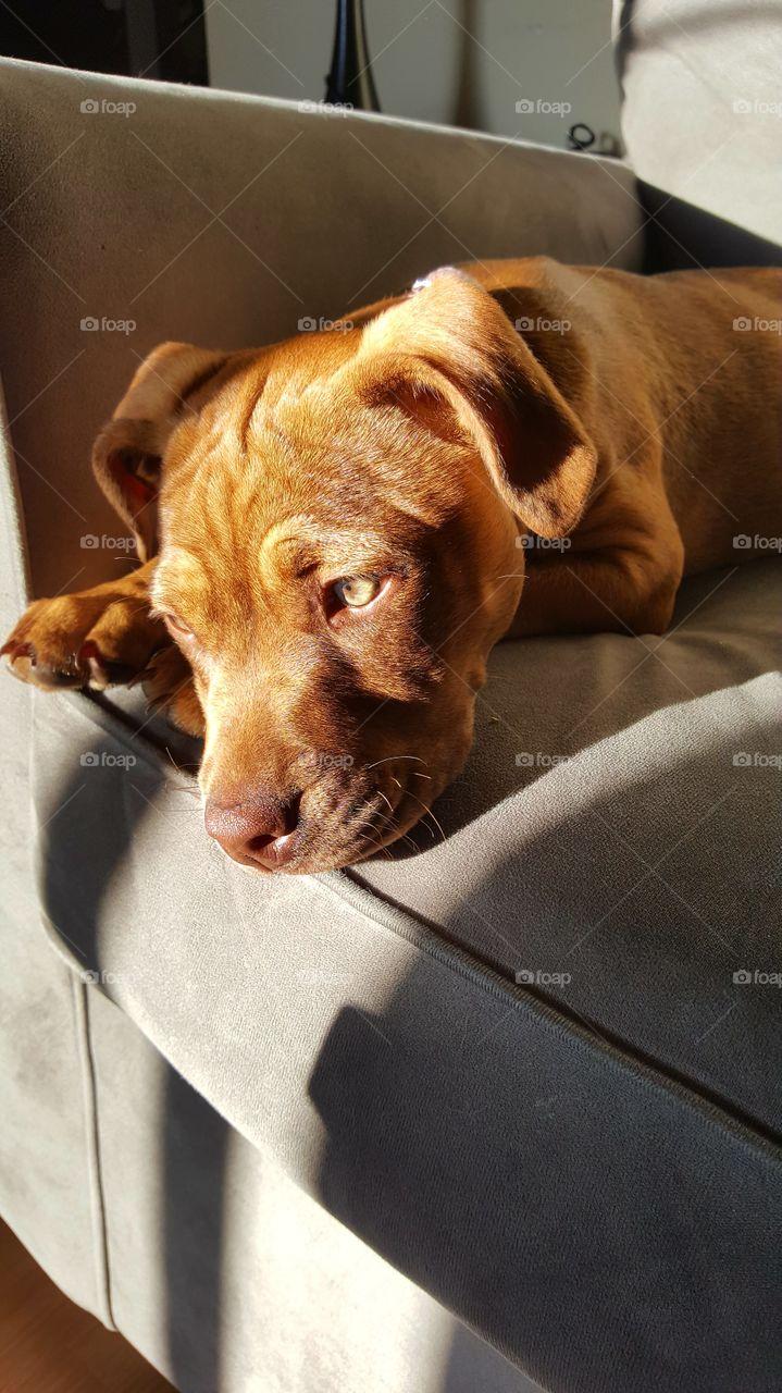 Dog resting on sofa