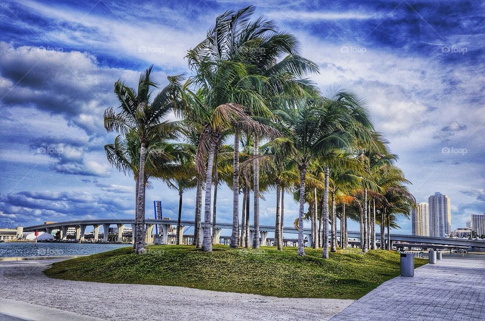 The landscapes of beautiful Miami