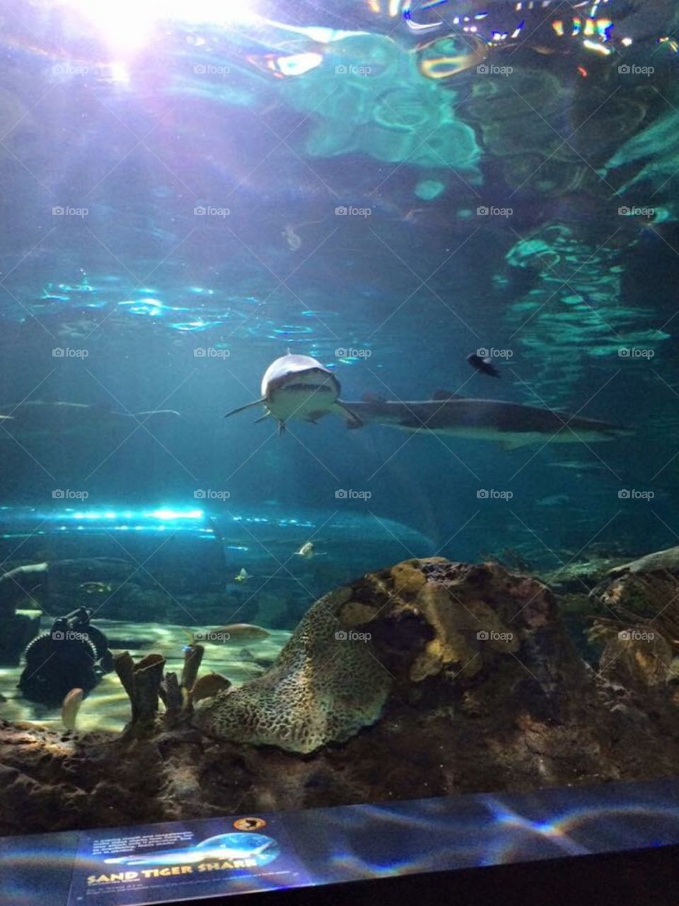 Sharks and fish at Ripley's Aquarium
