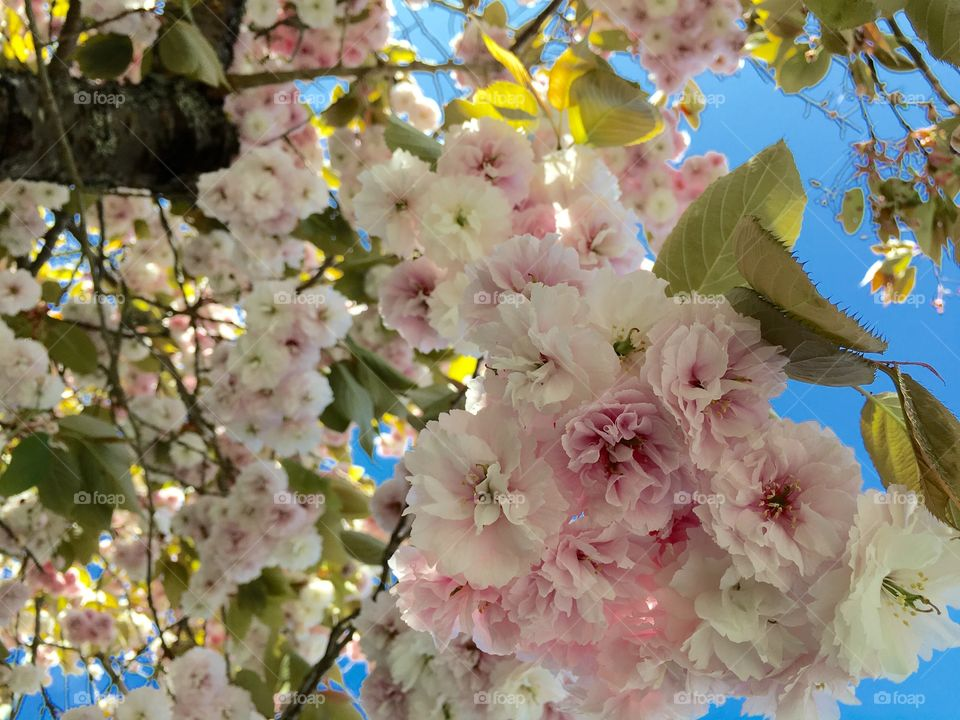Low angle view of flowers blooming in spring