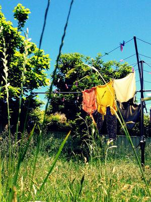 australia garden grass life by cataana