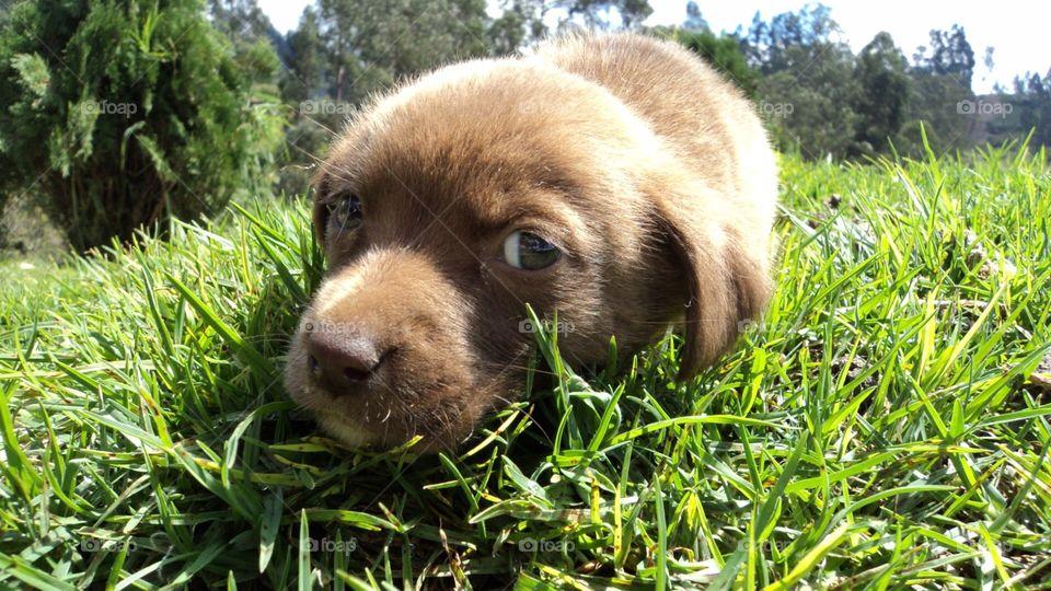 Baby dog looking at you