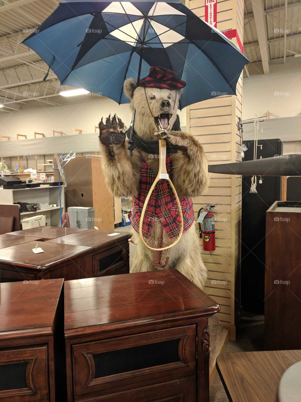 bear in the thrift store