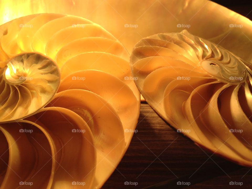 Nautilus shell cross section spiral symmetry Fibonacci sequence