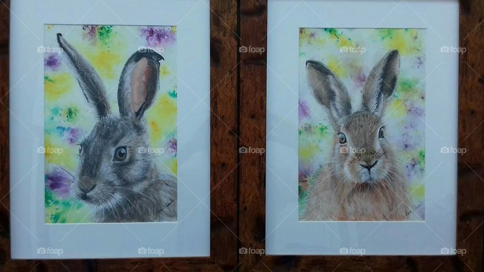 are rabbit photos framed up