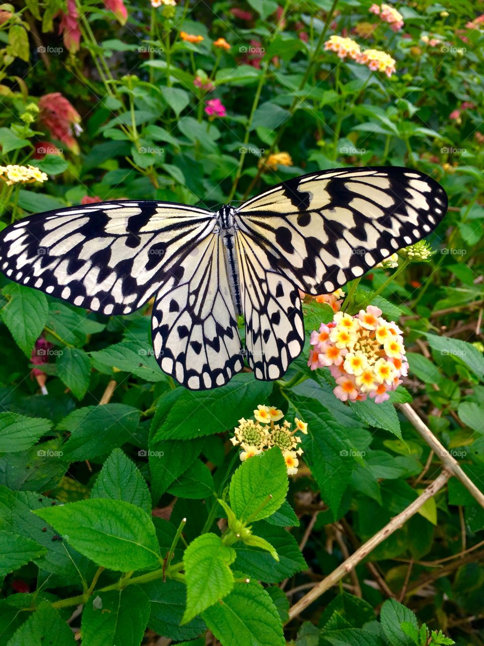 Beautiful Butterfly.  Tama Zoological Park. Tama, Japan