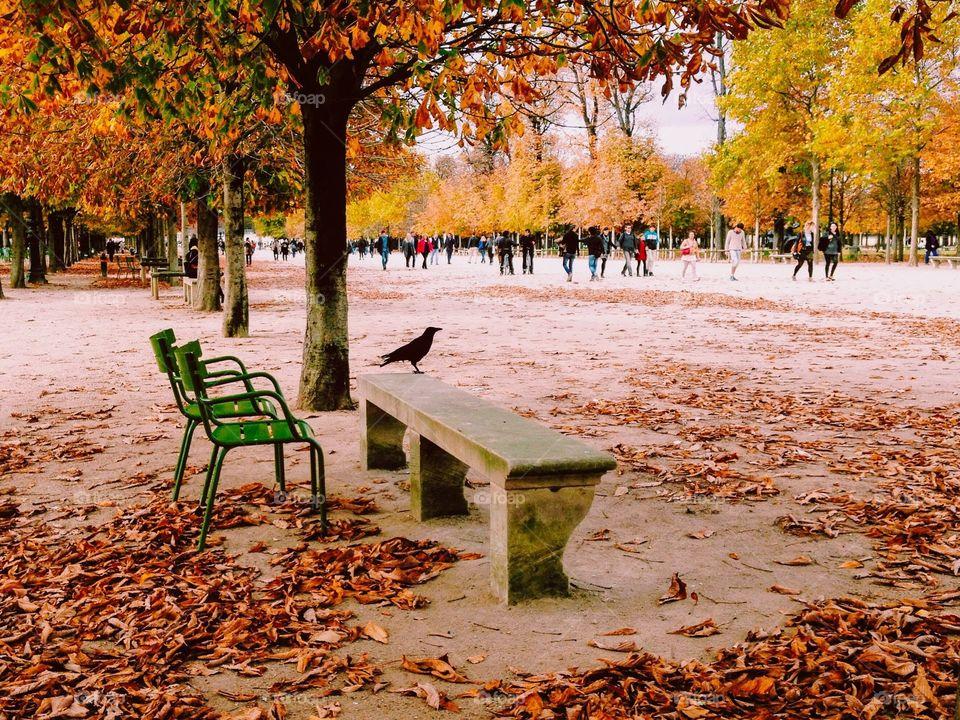 Black bird enjoying beautiful autumn park in Paris full of dry leaves.