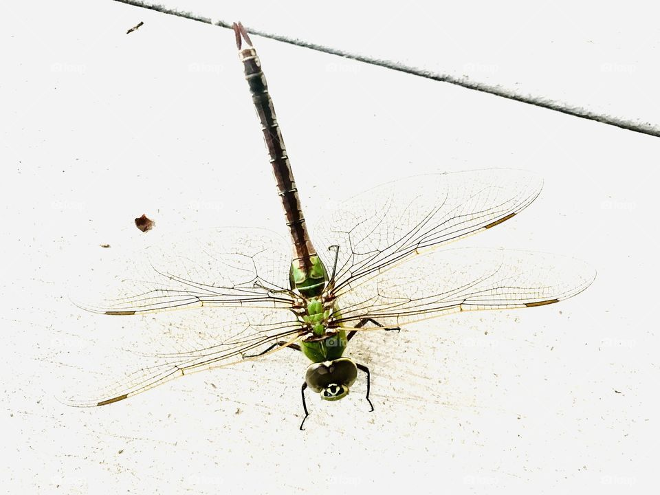 Beautiful photo of green dragonfly with intricately formed wings sitting on deck step.