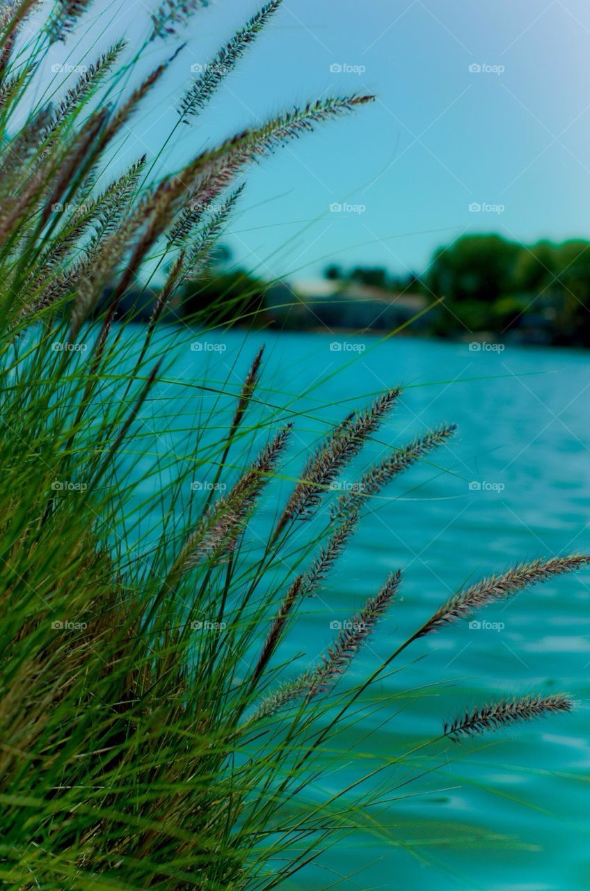 Grass by the lake