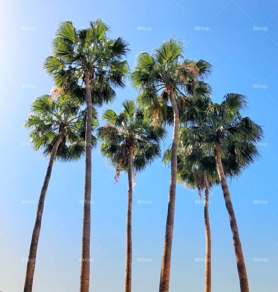 Beautiful group of palm trees