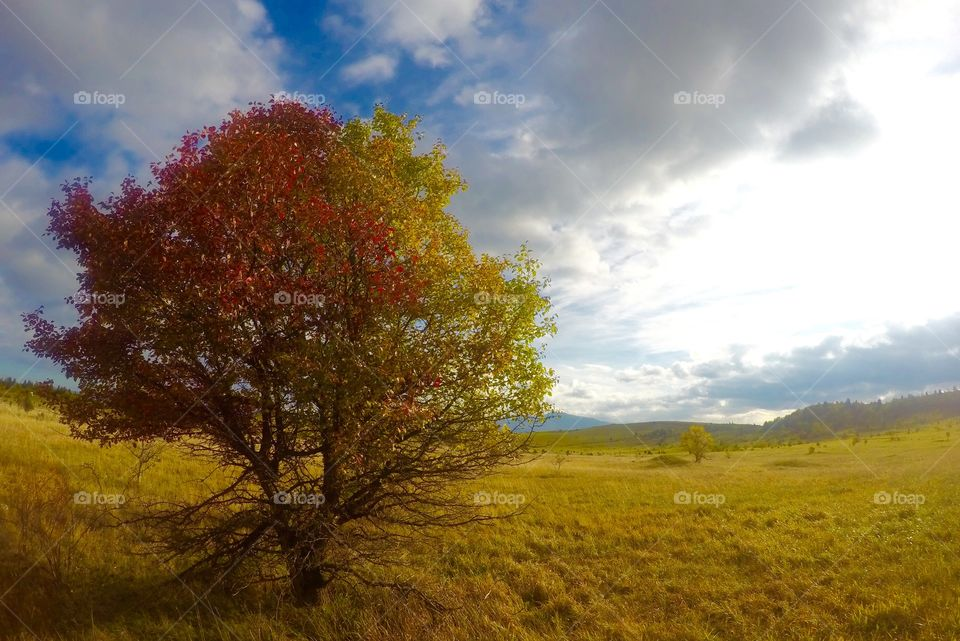 One beautiful tree