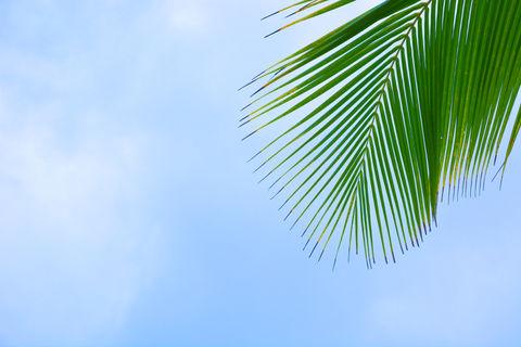 Palm tree. Took this photo at a south goa beach