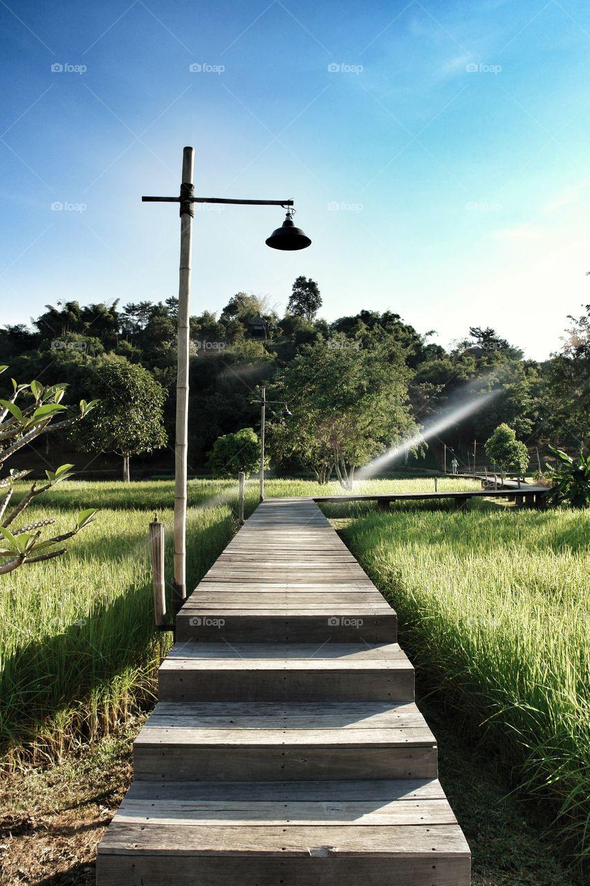 Boardwalk above rice paddy