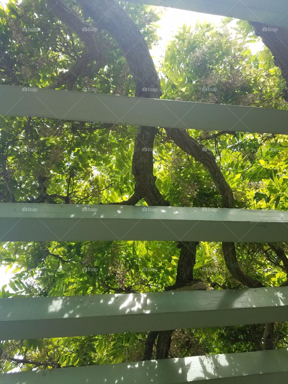 Nature, Wood, Tree, Leaf, Flora