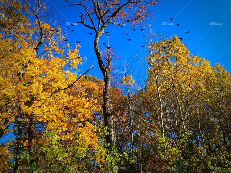 Yellow orange fall trees
