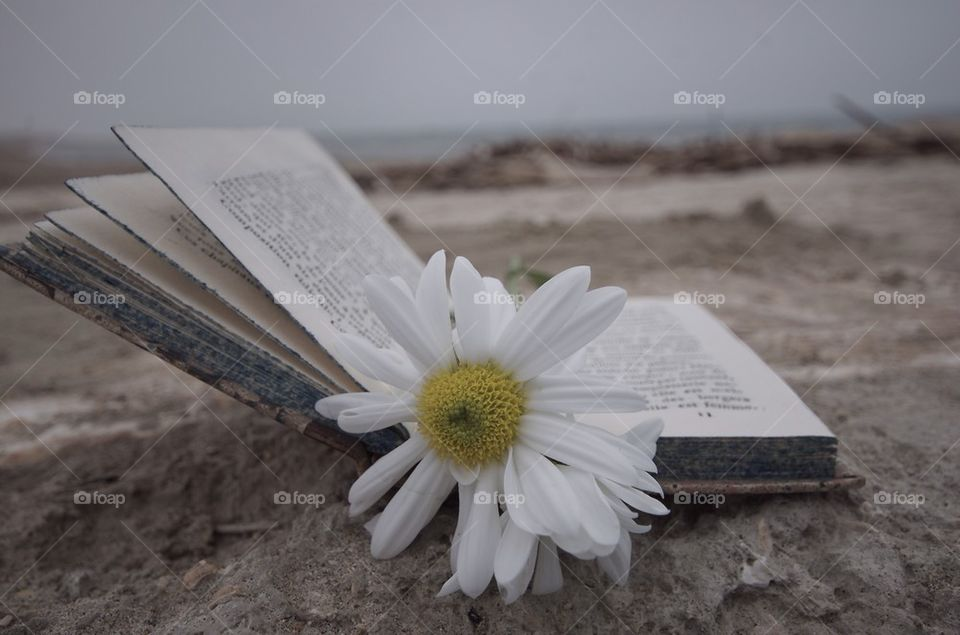 Daisy as bookmark, Ithonk about you