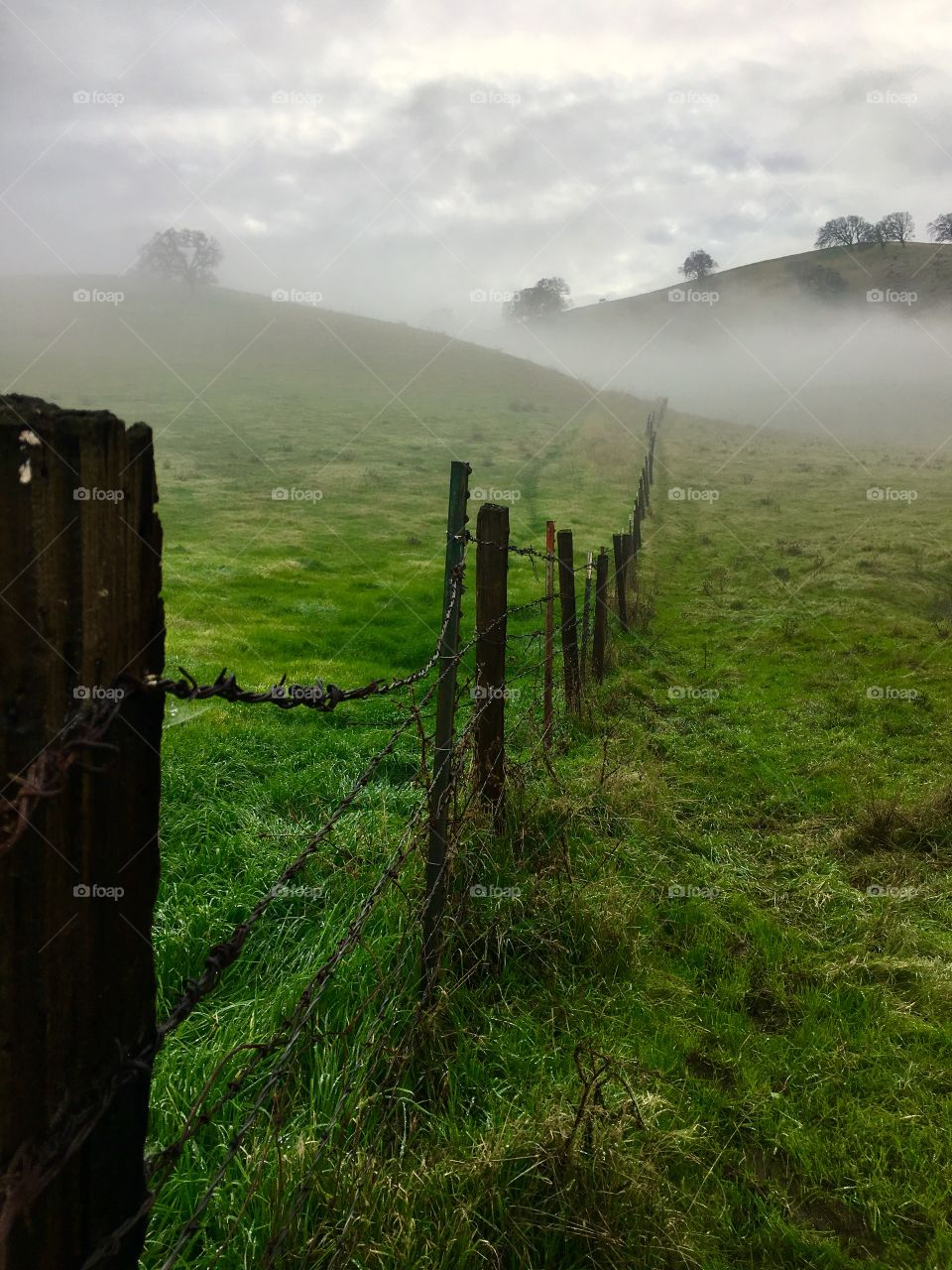 Foggy morning in the country.