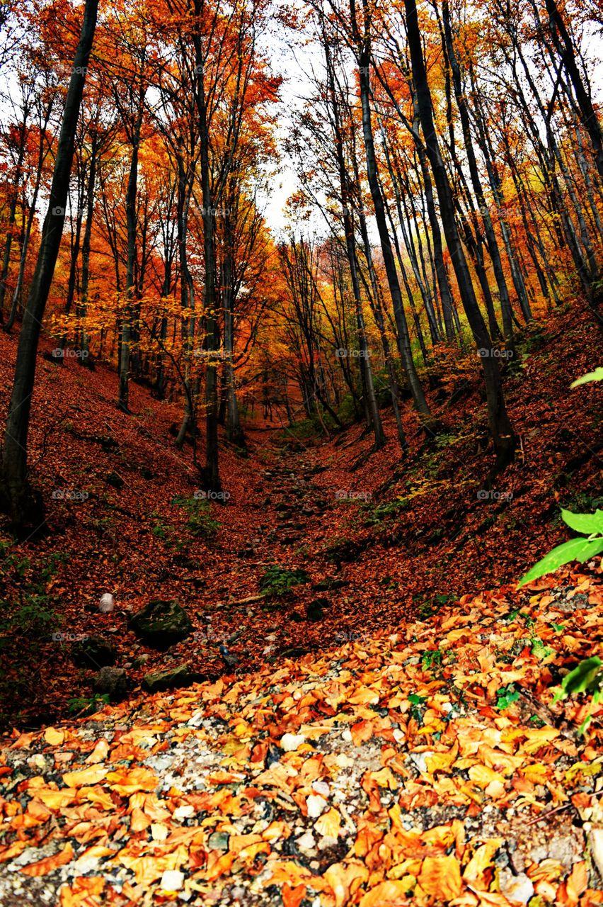 Autumn Views..
