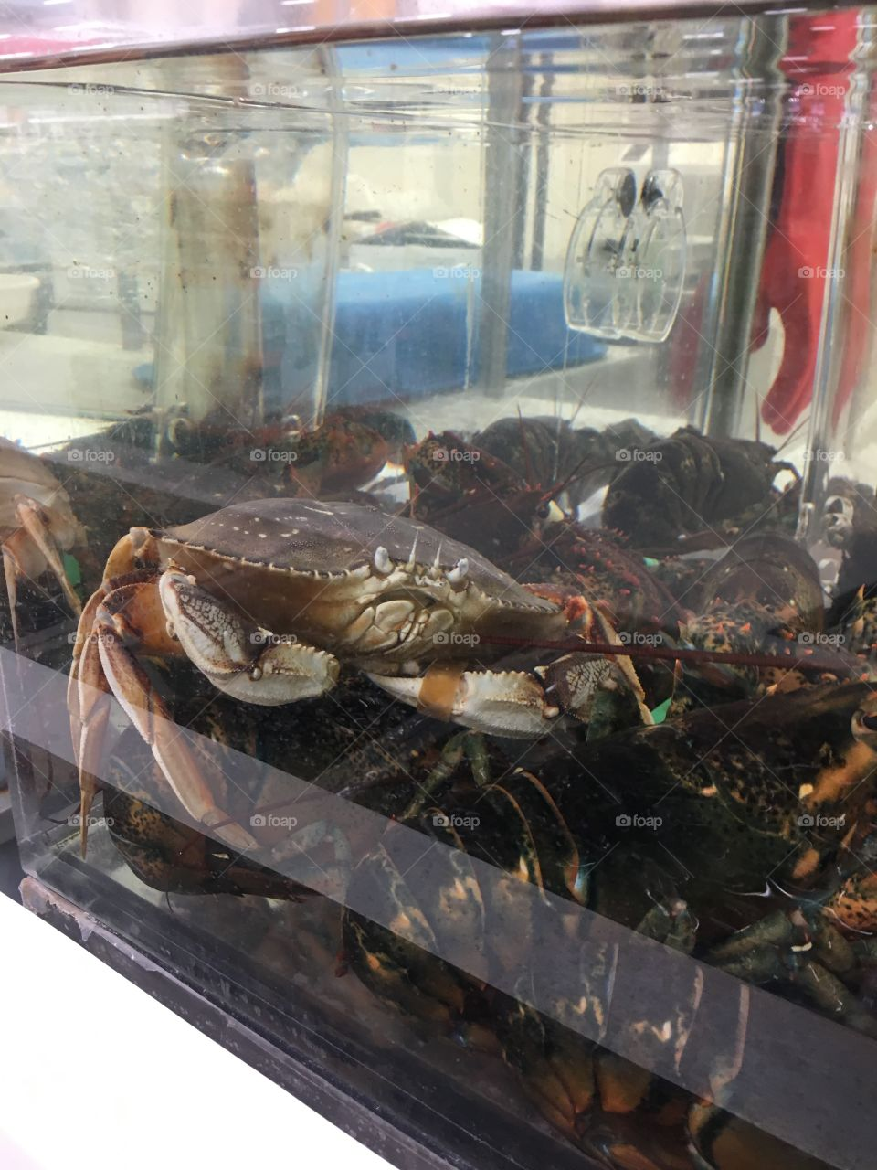 Crab and lobster at Superstore
