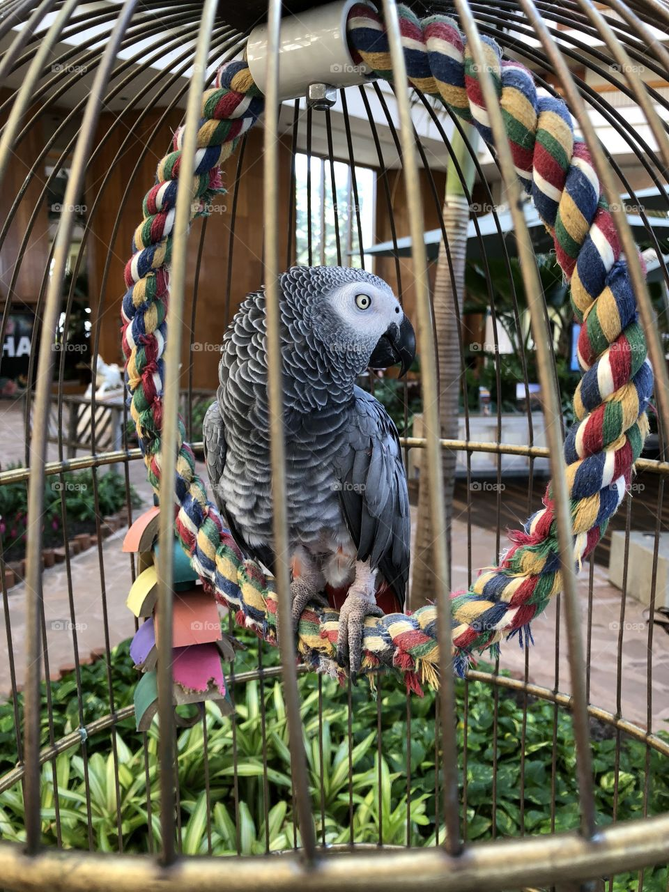 Parrot in the cage.