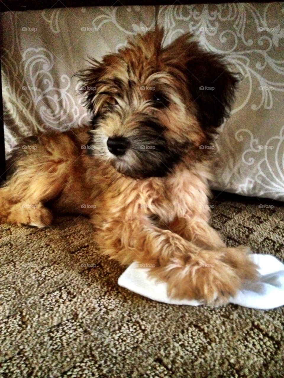 cute | pet, dog, animal, domestic
