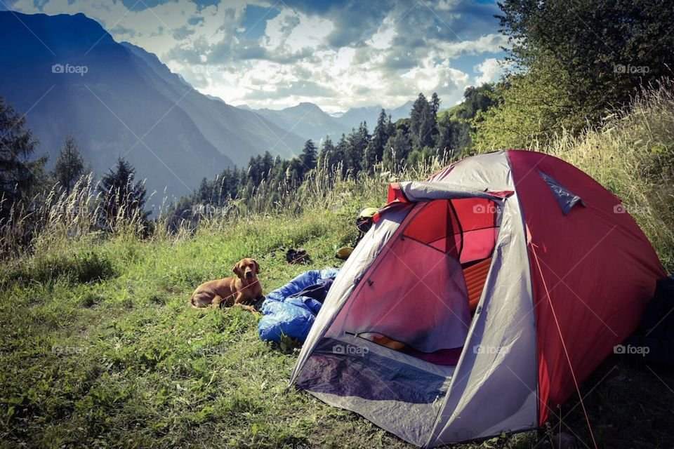 camping with dogs in the alps.