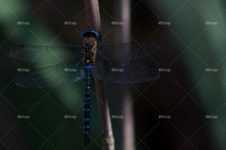 Close-up of damselfly with its wings spread