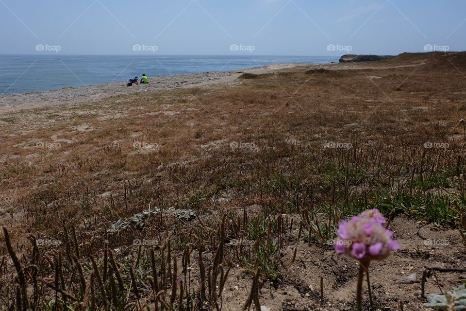 One pink wildflower, kids playing in background on a cliff