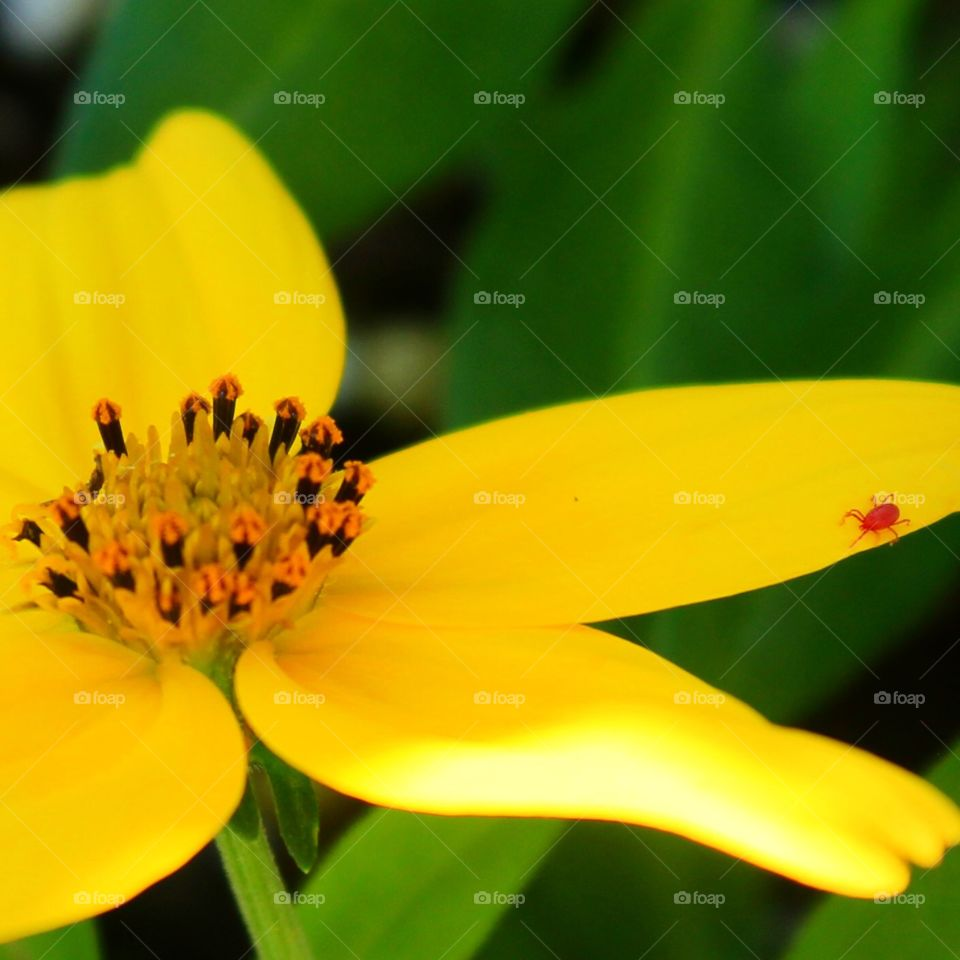 A flower and its mite